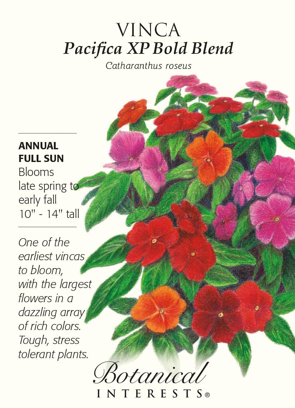 Amazon.com : Pacifica XP Bold Blend Vinca Seeds - 30 mg - Botanical ...