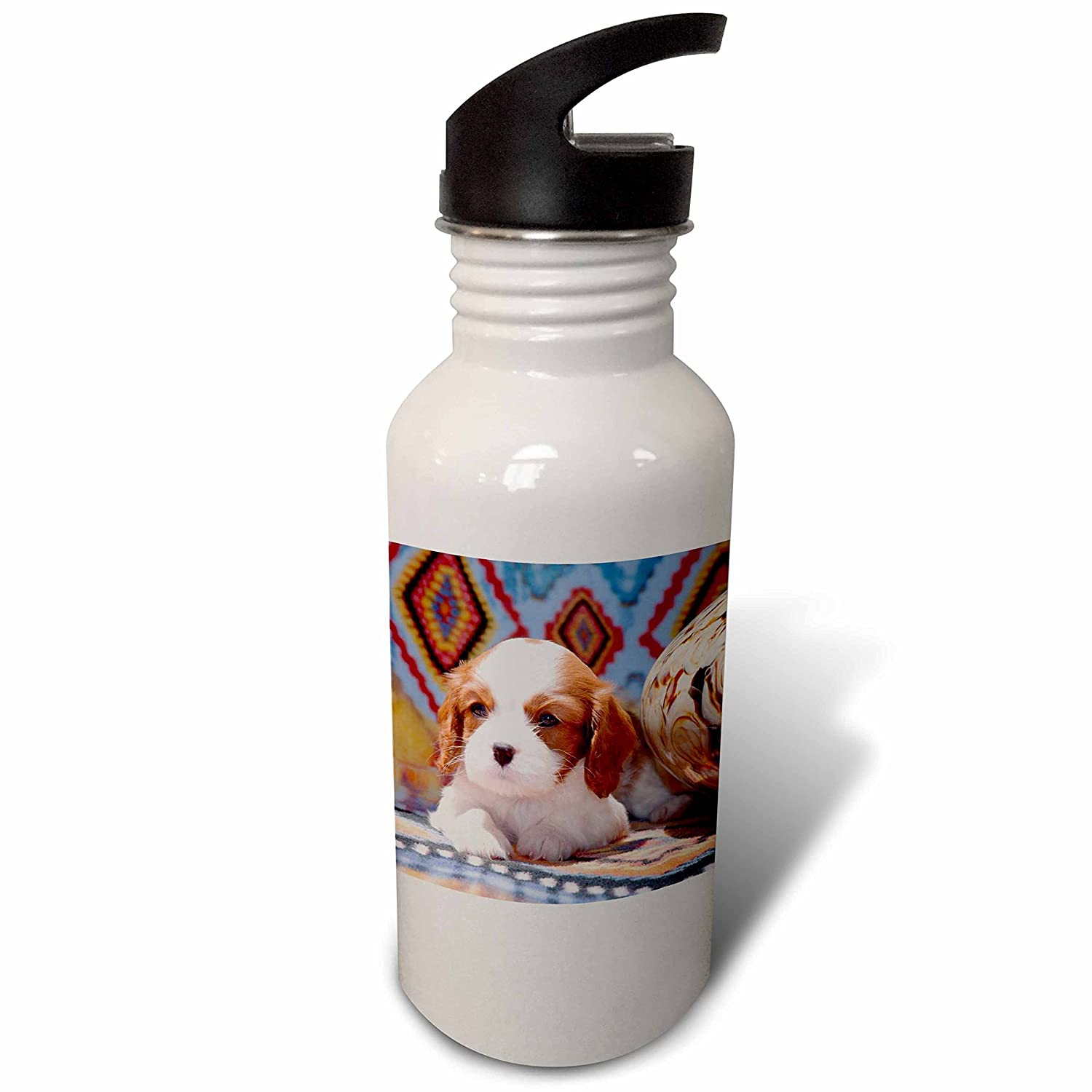 Cavalier Puppy Lying Next to Glass vase wb/_258248/_2 3dRose Danita Delimont MR Puppies Flip Straw 21oz Water Bottle