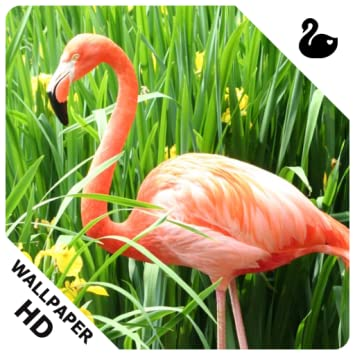 Amazoncom Flamingo Wallpapers Appstore For Android