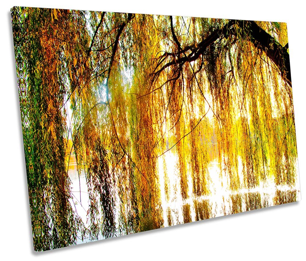 Amazon.com: Canvas Geeks Weeping Willow Tree Blossom - 60cm wide x ...