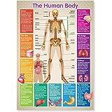 A3 Laminated Human Body Skeleton Educational Poster
