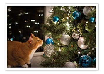 Amazon palm press inc christmas cards cat christmas tree palm press inc christmas cards cat christmas tree 12 holiday cards m4hsunfo