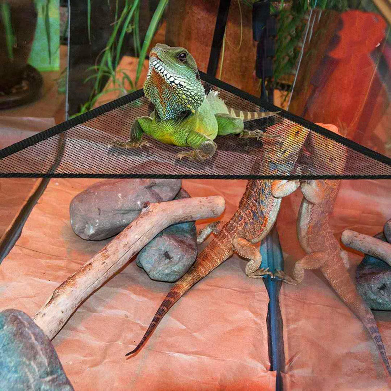 PietyPet Reptiles Lagartija Decoración del hábitat, 2 Dragon ...