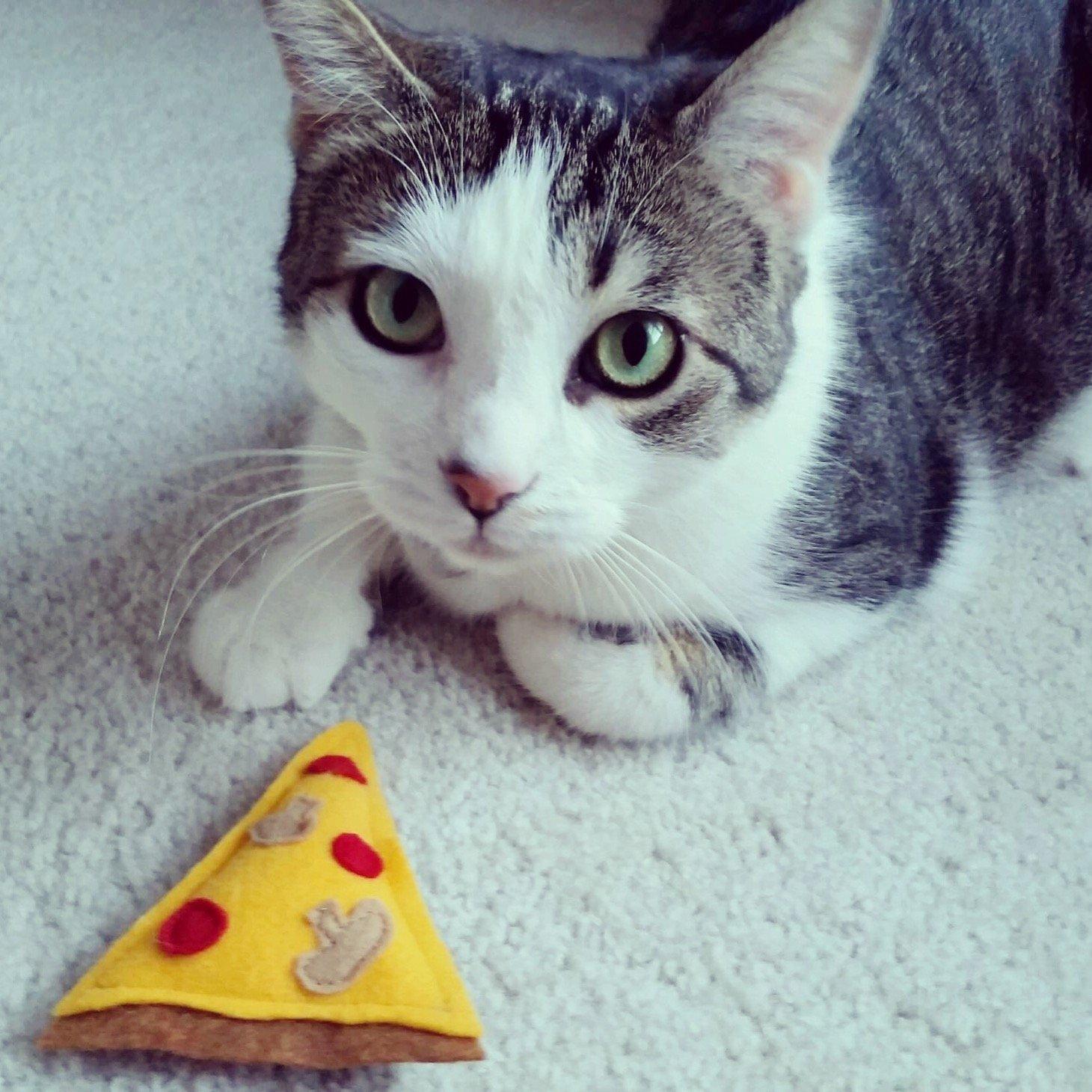 Amazon.com: Deluxe Pizza Slice Organic Catnip Cat Toy: Handmade