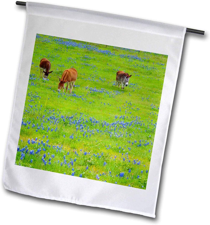 3dRose Donkey in Field of Bluebonnets Near Llano Texas - Flags (fl_332249_2)