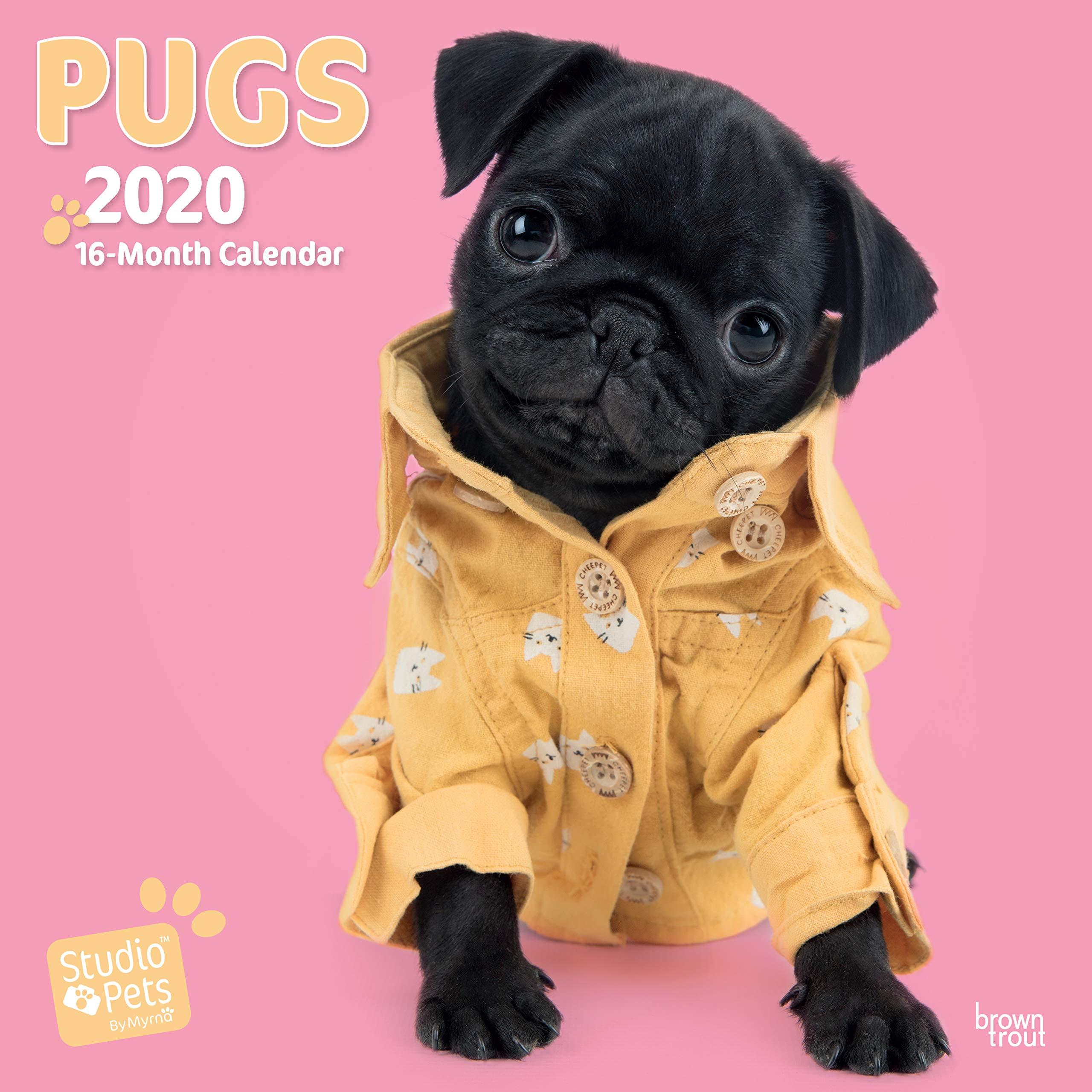 Pugs 2020 Square Wall Calendar Studio Pets Huijing Myrna 9781789930863 Amazon Com Books