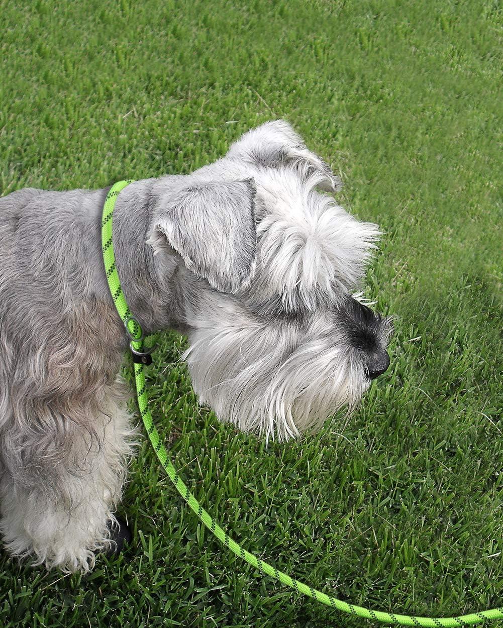 Joytale Slip Lead Dog Leash Reflective Rope Training Leash with Comfortable Padded Handle for Small Medium Dogs,6 Feet