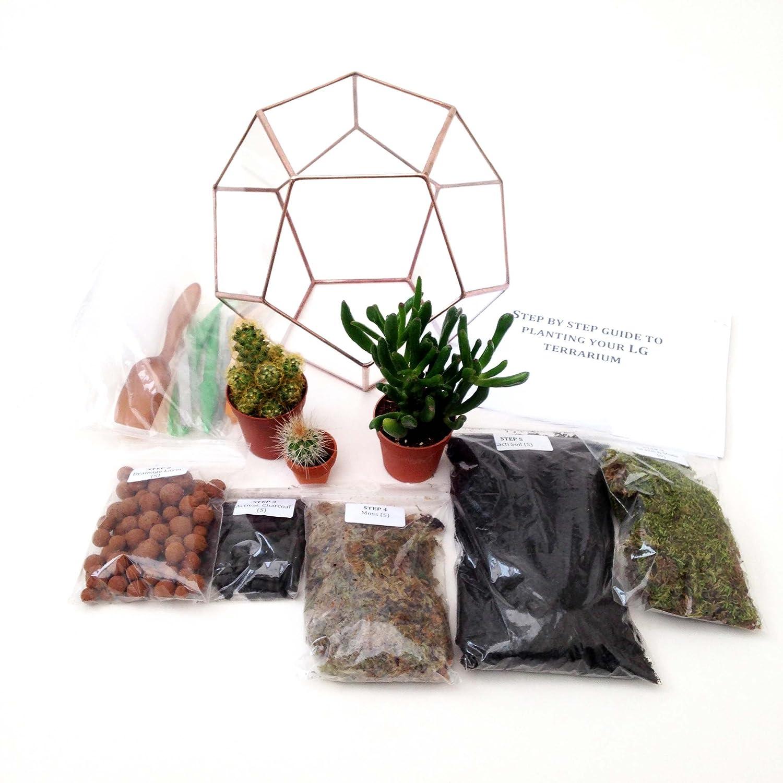 Dodekaeder Geometrische Glas Terrarium mit Anlage/S, fünf Taschen der Pflanzen, verschiedene Inhalte, Tools & Detaillierte Schritt für Schritt Guide zu ihr Terrarium '. Handgefertigt und verpackt in Großbritannien von Künstler Di., Bright Copper Patina, Dodecahedron Large