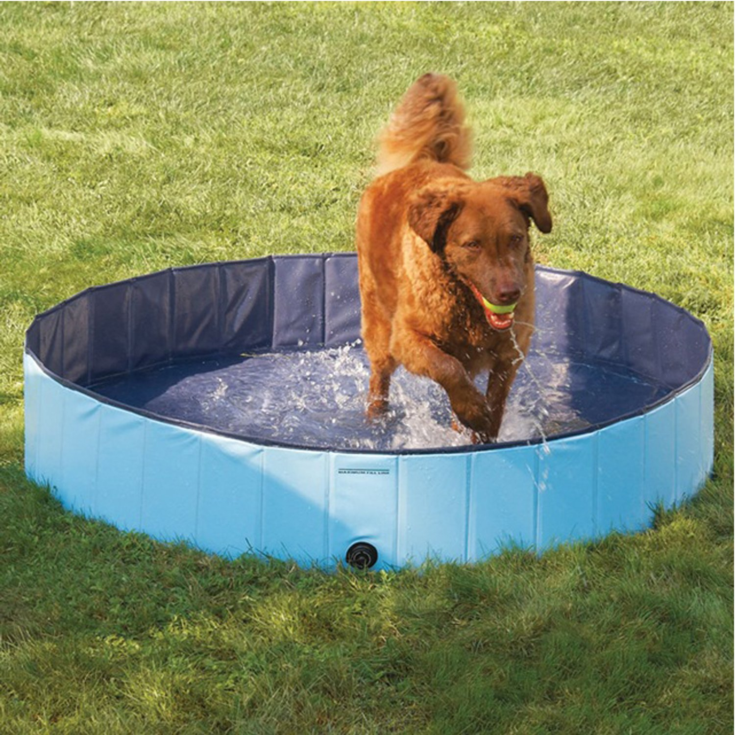 160x30CM Forever Speed Dog Pool Multifunctional Foldable Pet Pool Outdoor Indoor Portable Outdoor Tough and Sturdy Pet Swimming Pool 160  30CM bluee