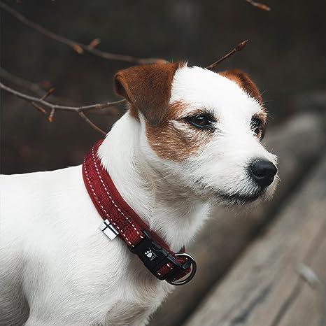 Buckle Bandit Dog and Pheasant G/ürtelschnalle in einer meiner Pr/äsentationsschachteln.