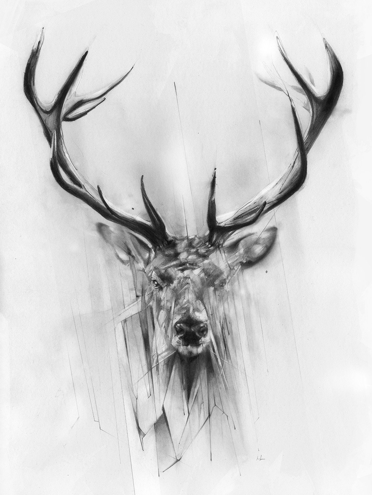 Red Deer by
