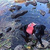 Amazon Com Kurgo Baxter Dog Backpack Dog Saddlebag Dog