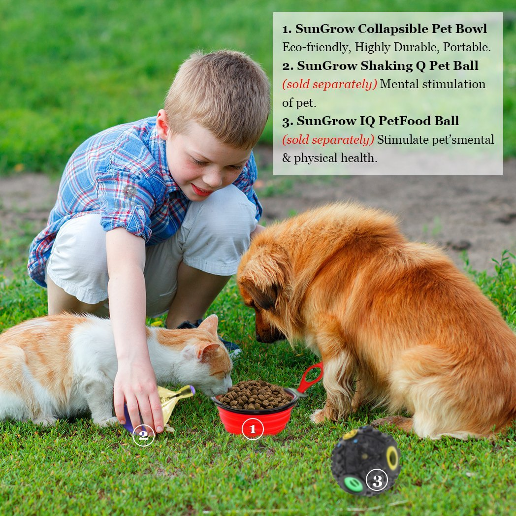 Pet Supplies : Collapsible, Portable Pet Travel Bowl -- Food, water feeder  for camping, hiking, journey - Food-grade, BPA-free - Carabiner clip for  easy ...