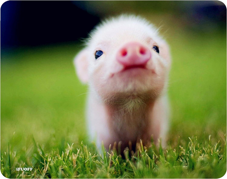 Pig Shopping Pad