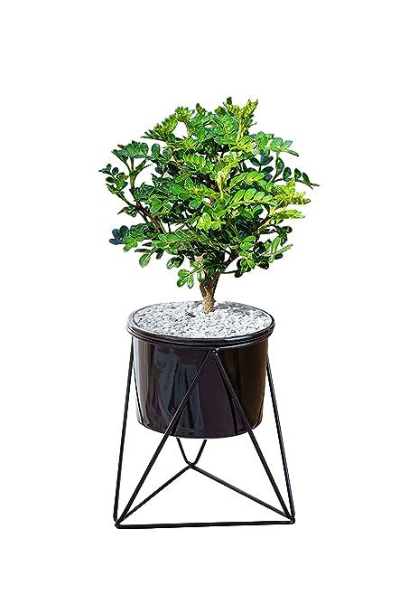 293c58412e LA JOLIE MUSE White Ceramic Flower Pot Garden Planters 6.5 Pack 2 Indoor  Plant Containers with ...