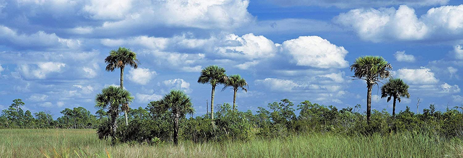 "Everglades Landscape with Palm Trees, Florida, panoramic print landscape photo nature photography wall art home office decor sizes up to 44x132"" fine art print signed by the artist."