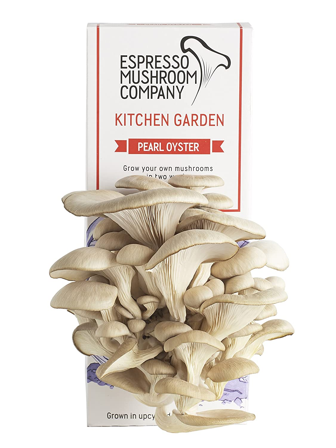 Pearl Oyster Mushroom Kitchen Garden Grow Your Own Kit: Amazon.co.uk ...