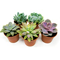 Succulent Plants,Fully Rooted in Planter Pots with Soil - Real Live Potted Succulents/Unique Indoor Cactus Decor by Plants for Pets