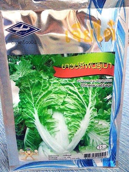 Portal Cool 4270 Las semillas de col china Planta Orgánica ...