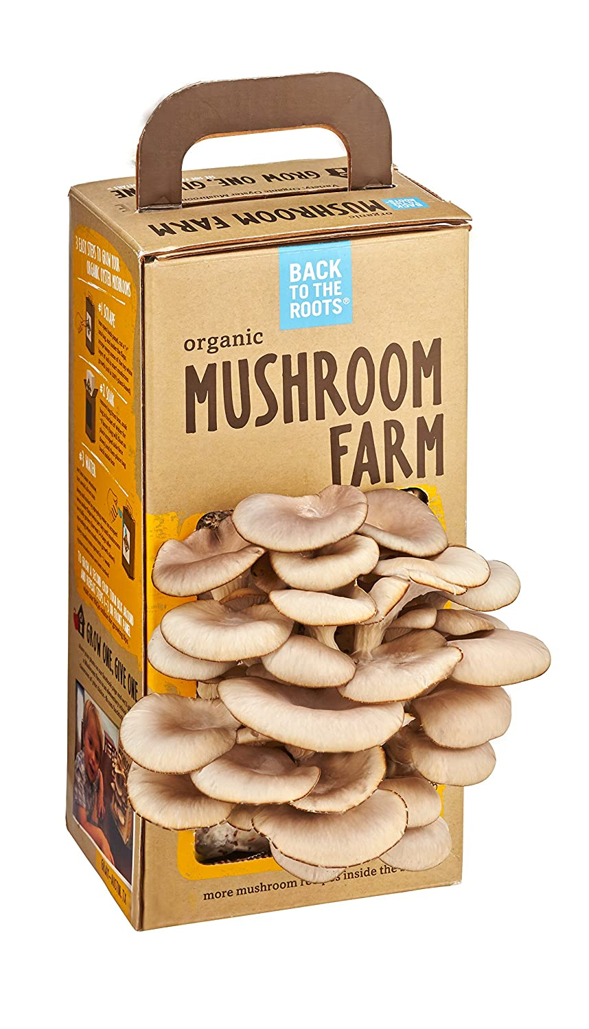 Kitchen Garden Mushrooms Amazoncom Back To The Roots Organic Mushroom Farm Amazon Launchpad