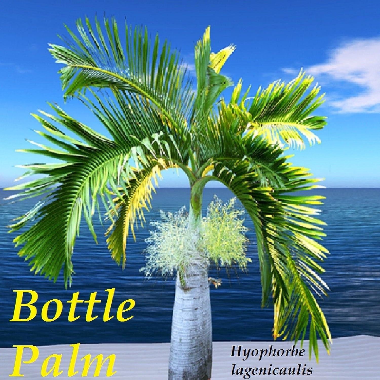 Seeds Palm Tree Bottle Hyophorbe Lagenicaulis 10 Seeds Seeds