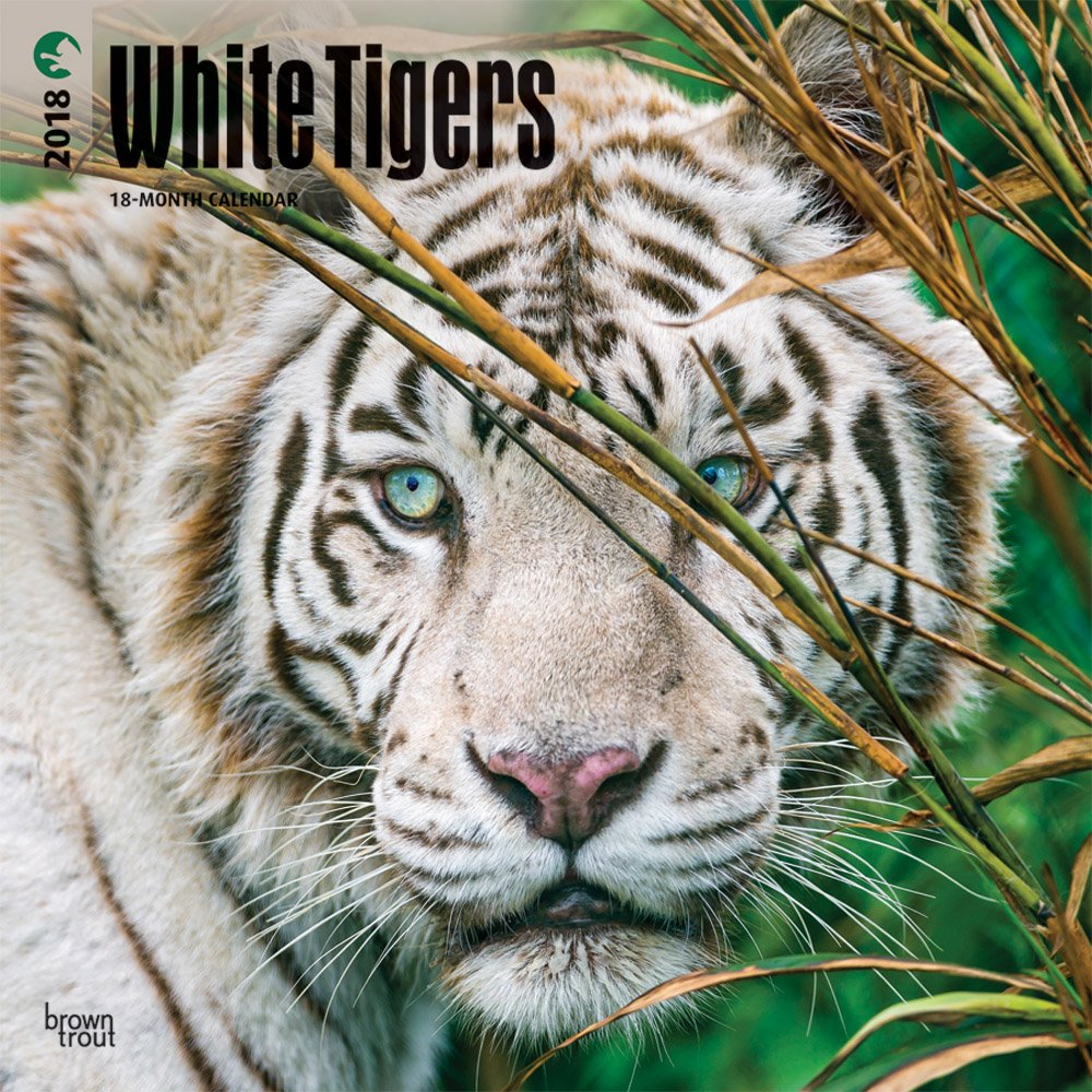 White Tigers 2018 12 x 12 Inch Monthly Square Wall Calendar, Wildlife Zoo Animals (Multilingual Edition)