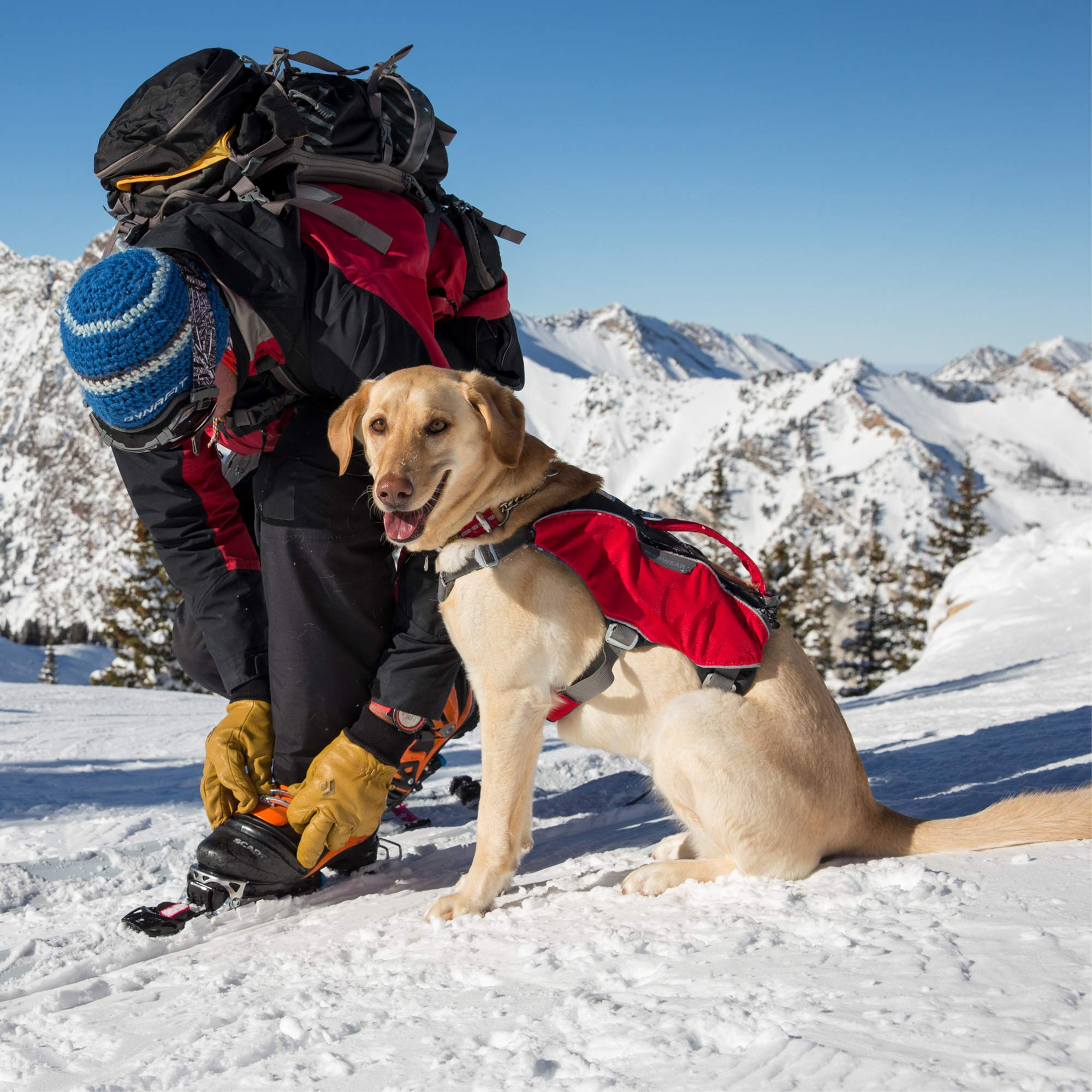 RUFFWEAR - Web Master Pro Dog Harness, Search and Rescue, Service Dogs, Snowboarding, Skiing, Everyday Wear, Red Currant, Small by RUFFWEAR (Image #9)