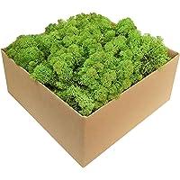 GJS Islandmos, mos in 1 kg, 500 g, 200 g, verschillende Kleuren - Echt geconserveerd natuurlijk mos (eiland) om te knutselen, decoratief voor de decoratie van Pasen, modelbouw