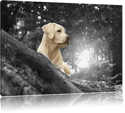 Labrador siti di incontri naruto incontri quiz