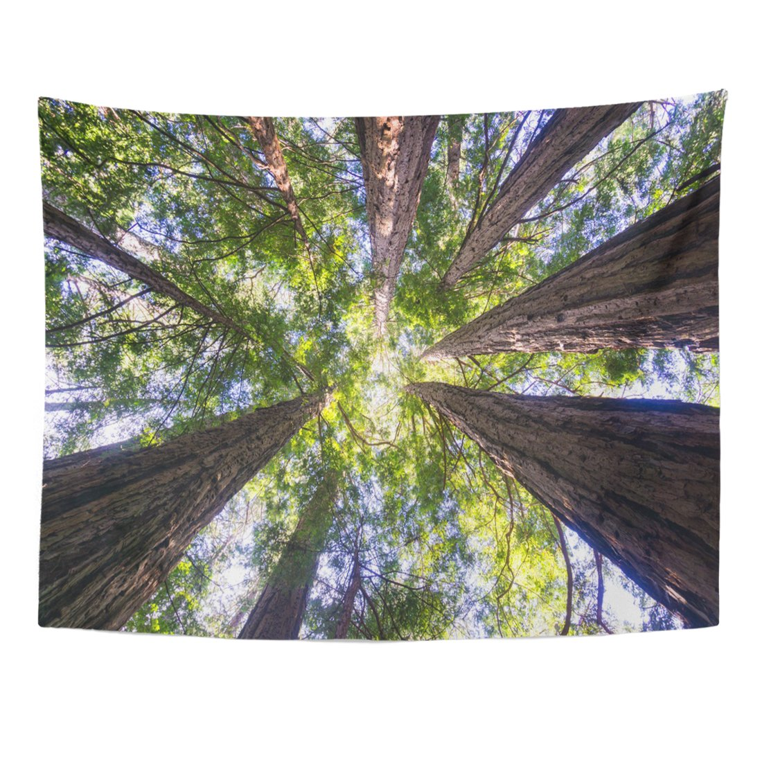 Emvency Tapestry Colorful Sequoia Redwood Forest California Red Giant Sempervirens America Home Decor Wall Hanging for Living Room Bedroom Dorm 60x80 Inches