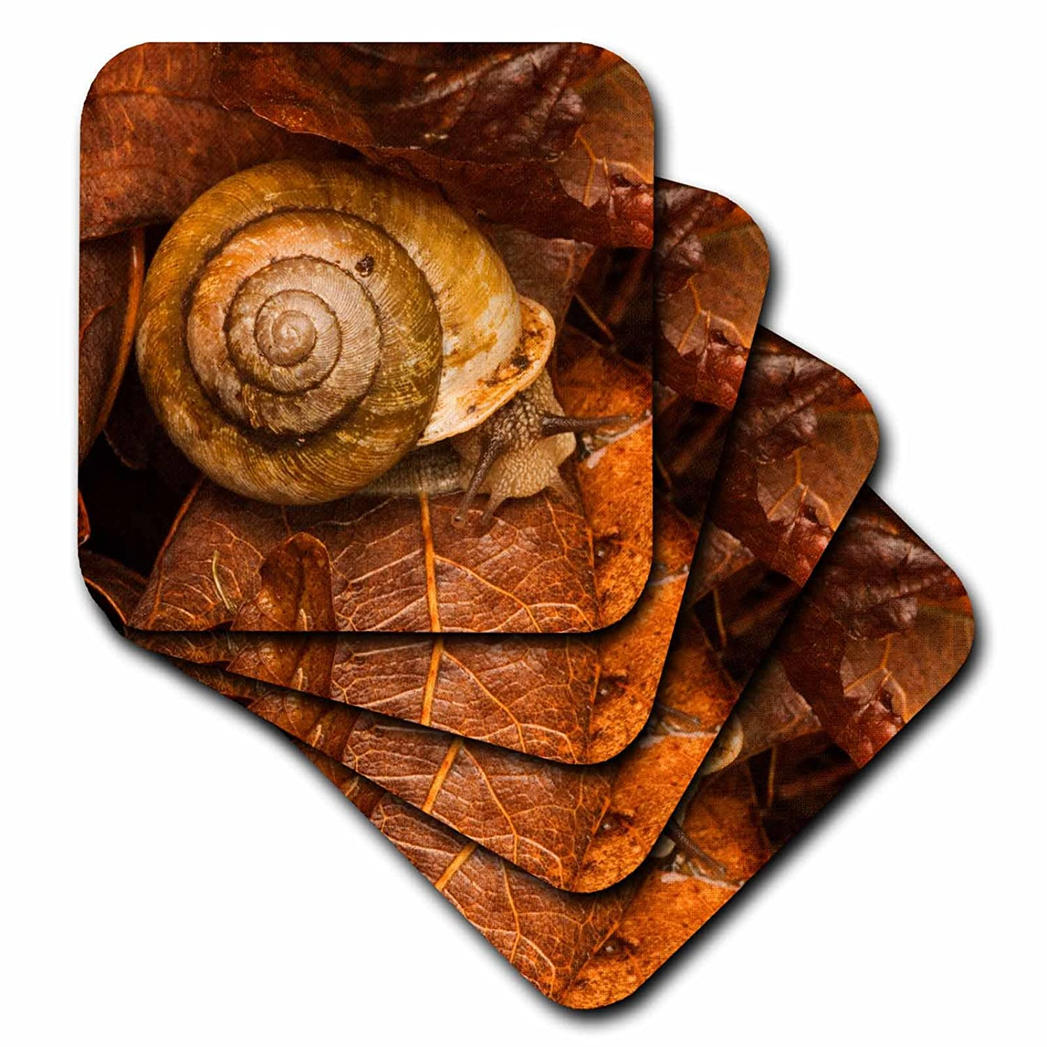 Joanne Wells 3dRose cst/_89369/_2 Great Smoky Mountain NP Set of 8 US11 JWL0169 Snail Soft Coasters
