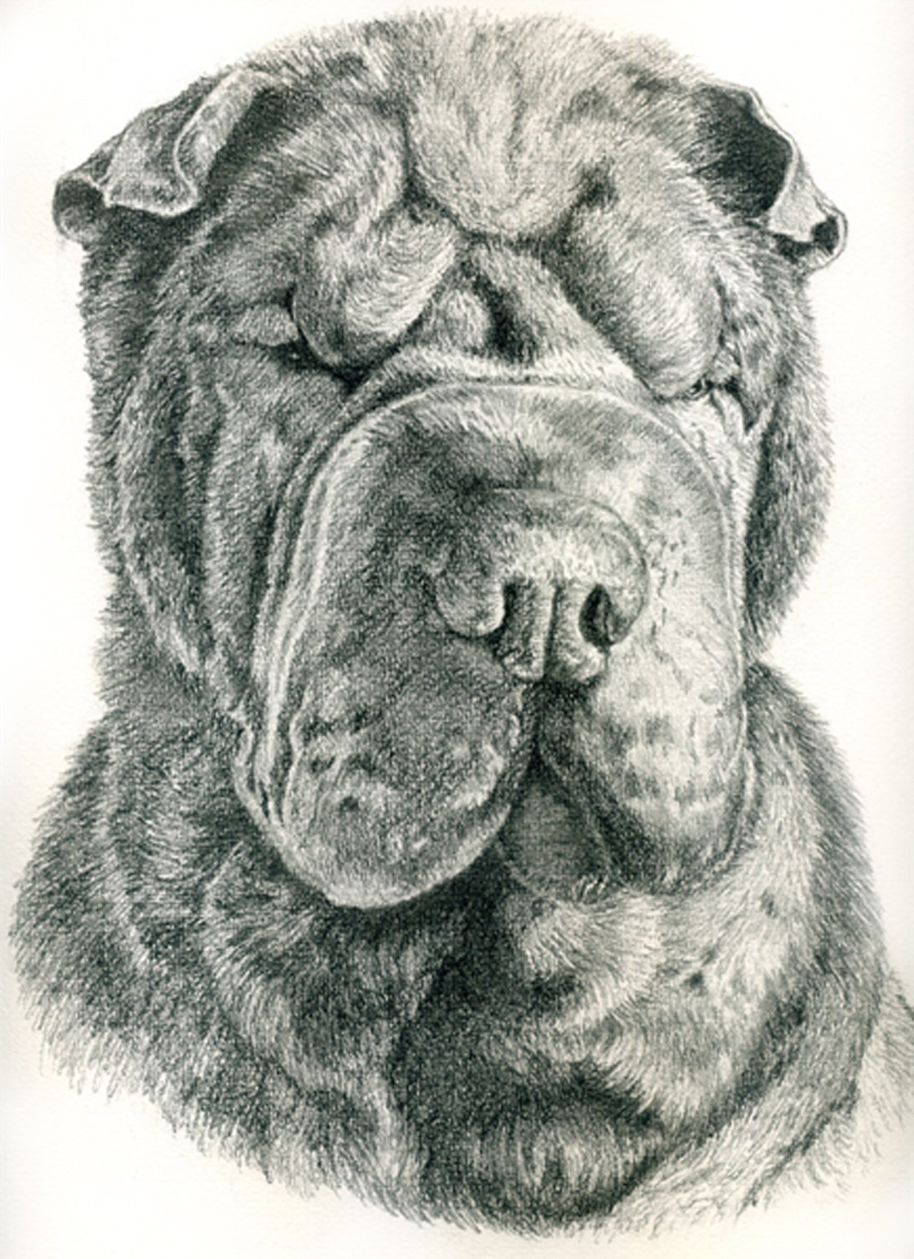 Custom Pencil Pet Portrait with optional spot watercolor by artbymarinparr