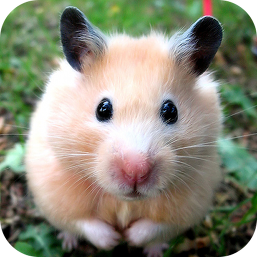 Amazon Com Cute Hamster Appstore For Android