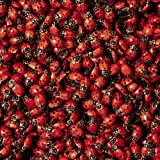 1500 Live Ladybugs --- Beneficial Insects --- Fresh Premium Young Ladybugs --- Delivered To You Alive Guaranteed --- Great For Your Gardens Health --- Natural Earth Friendly Green Pest Control 4 You