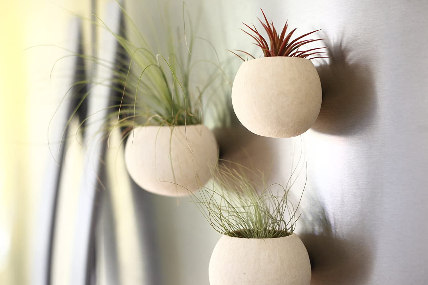 Shop Succulents Seed Pod Magnet Planter Trio with Air Plants