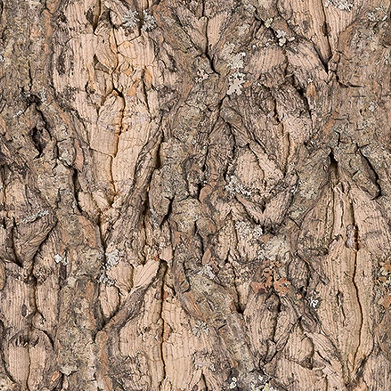 Reptile Natural Looking Cork Background 20 x 15cm
