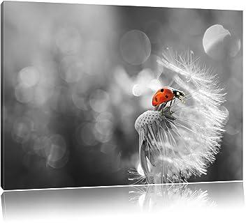 kleiner Marienkäfer auf Pusteblume schwarz/weiß Format: 100x70 auf  Leinwand, XXL riesige Bilder fertig gerahmt mit Keilrahmen, Kunstdruck auf  ...