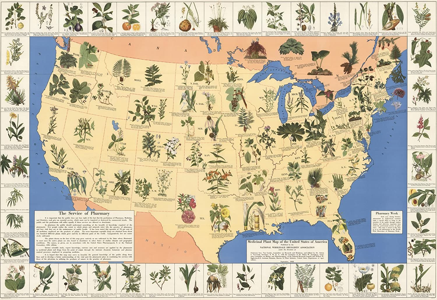 Amazon.com: Historic Map | Medicinal Plant map of The United States ...