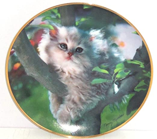Amazon.com: Gato persa Collector Placa Out on a Limb ...