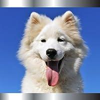 Sonneries pour chiens