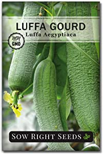 Sow Right Seeds - Luffa Gourd Seed for Planting - Non-GMO Heirloom Packet with Instructions to Plant a Home Vegetable Garden - Great Gardening Gift (1)