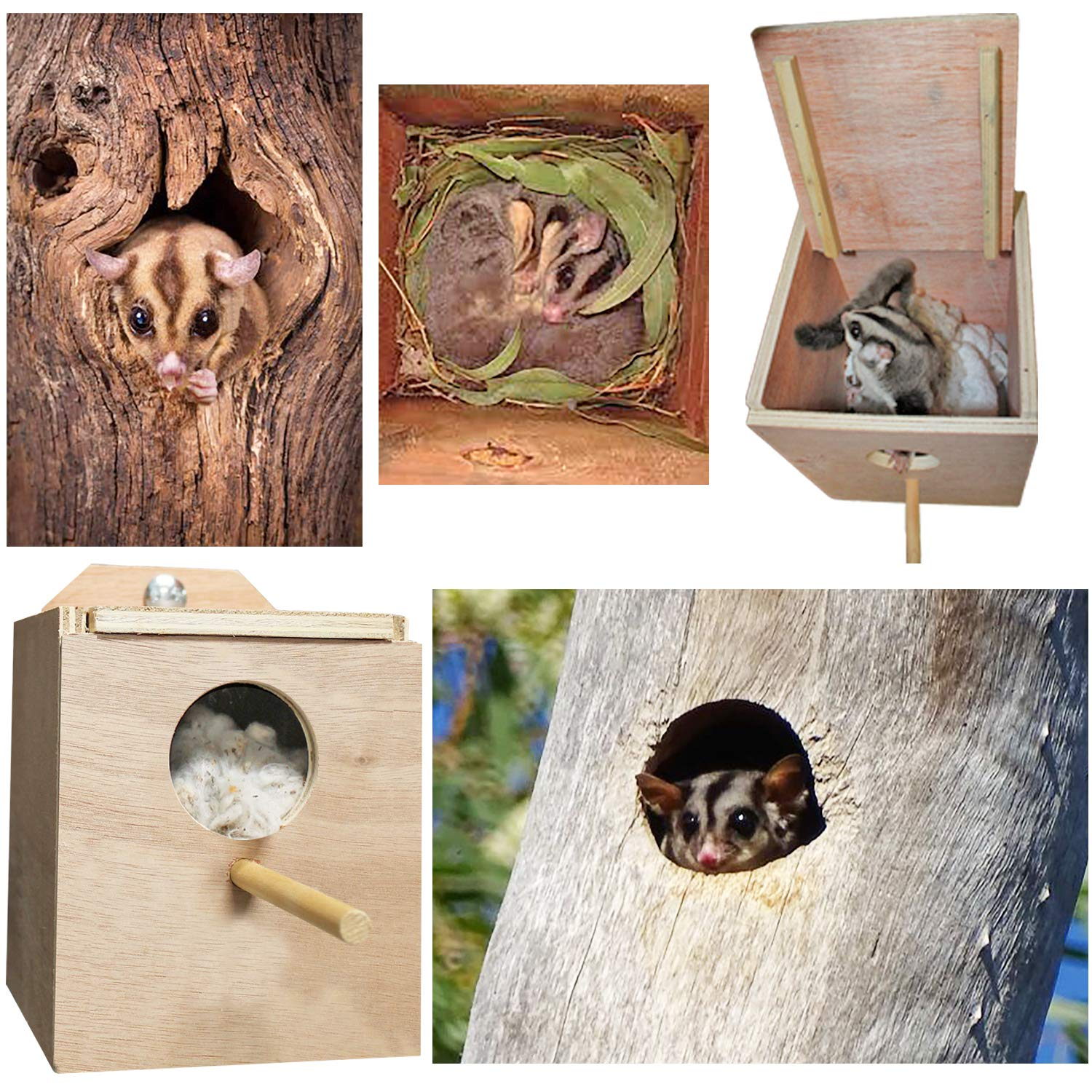 Wood Nest Box with Cage Attachment, Hinged Lid, Perching Ledge - for Sugar Glider, Squirrel, Rat, Degu, Finch, Parakeet, Lovebird, Parrotlet, Lovebird, Canary, Cockatiel, Other Birds & Small Pets by Exotic Nutrition
