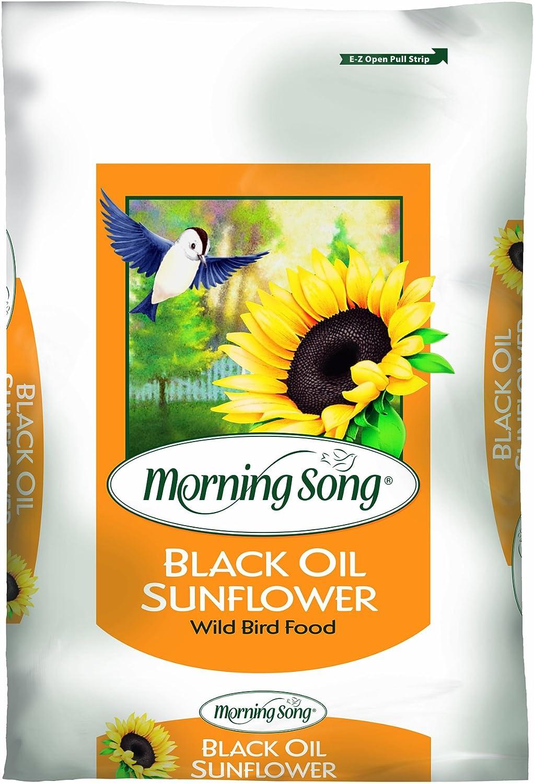 Morning Song 11410 Black Oil Sunflower Wild Bird Food, 50-Pound