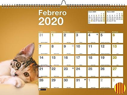Miquelrius 28360 - Calendario de Pared A3 para escribir Perros & Gatos 2020 Catalán: Amazon.es: Oficina y papelería