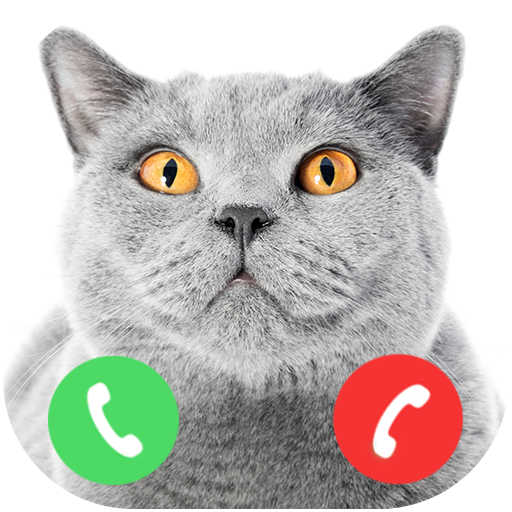Effects Sound Phone Mobile Free (Fake Call From British Shorthair Cat Prank (no wifi))