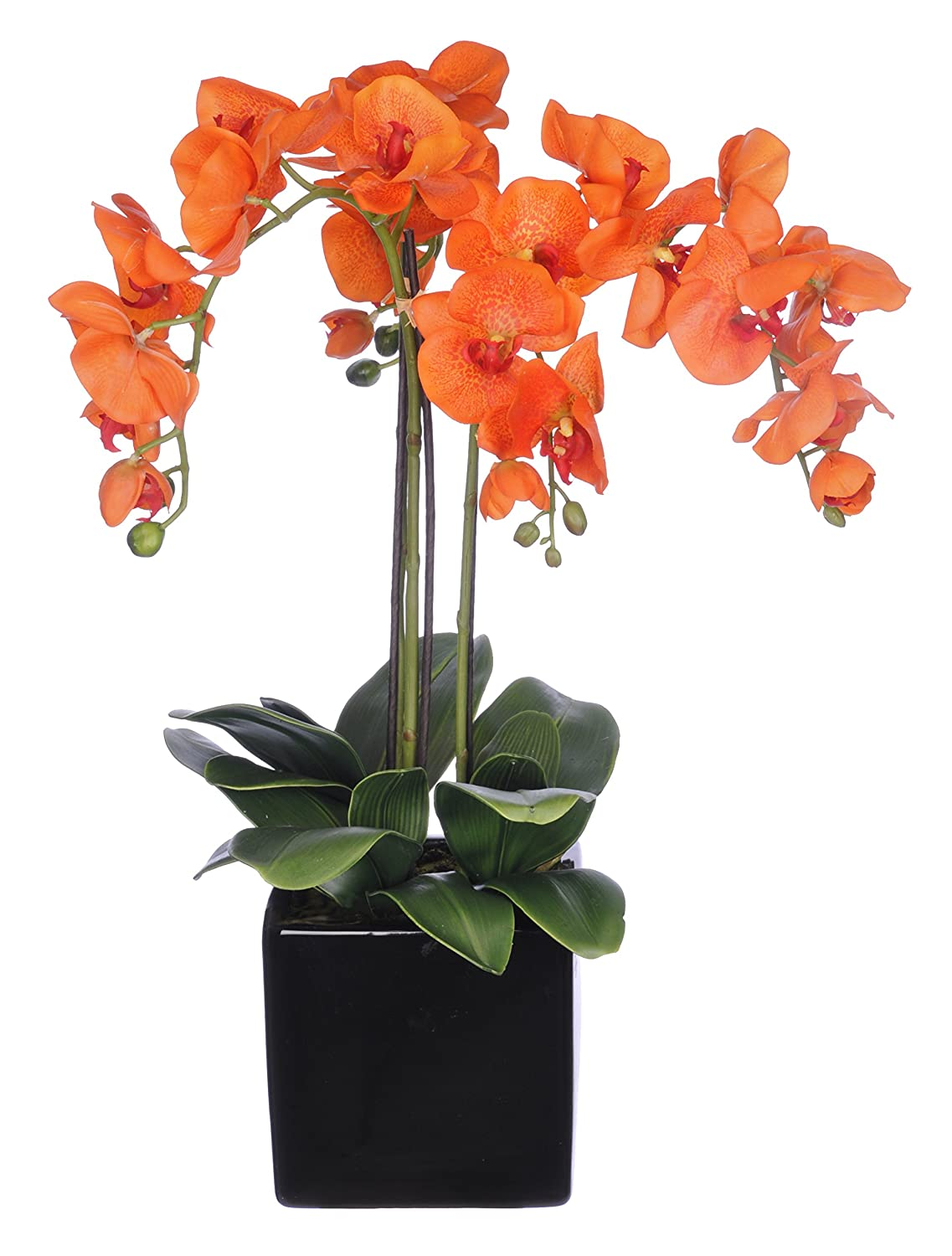 Amazon house of silk flowers artificial triple stem amazon house of silk flowers artificial triple stem phalaenopsis orchid arrangement lime green home kitchen dhlflorist Gallery