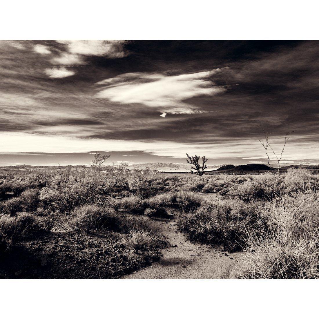 A Joshua Tree In Desert Scrub - Mojave National Preserve California Fine Art Photography Print Black and White by Spectroland