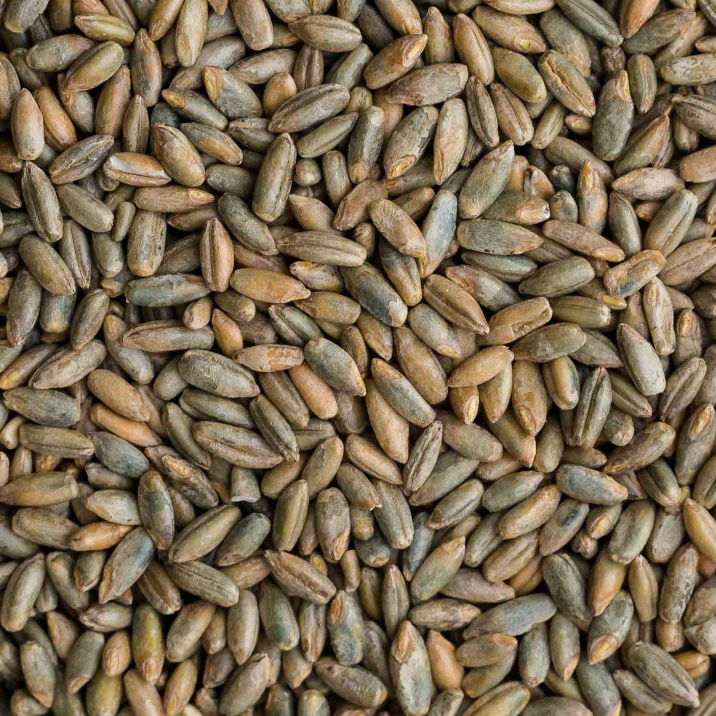 Rye Berries | 5 Pounds | High in Fiber and Iron - 5 Pound Bag of Rye Berries