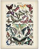 Amazon Price History for:Butterflies Art - 11x14 Unframed Art Print - Great Gift for Bathroom Decor