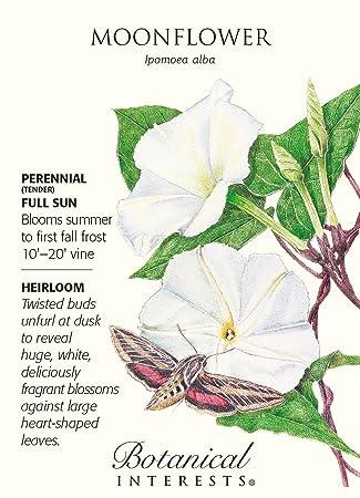 Moonflower Seeds 5 Grams Ipomoea